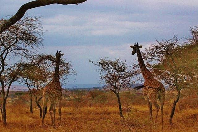 Voyager en Tanzanie : les étapes incontournables du pays à ne pas manquer